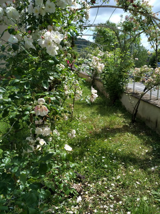 Juin Jardins 01_resize